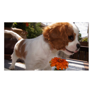 Cavalier Smelling Flowers Business Card
