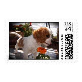 Cavalier Smelling Flowers Postage