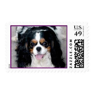 Cavalier Spaniel Smiles Postage