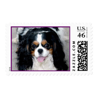 Cavalier Spaniel Smiles Stamps