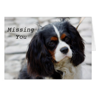 Cavalier Spaniel thoughts Missing You Card