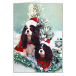 Cavaliers at Christmas Greeting Cards