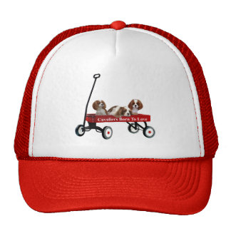 Cavaliers In Wagon Hat