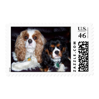 Cavaliers Stamps