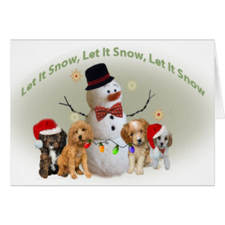 Cavapoo  Christmas Cards Let It Snow
