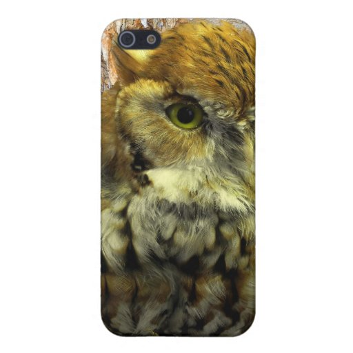 Cavern Owl Watch iPhone 5 Covers