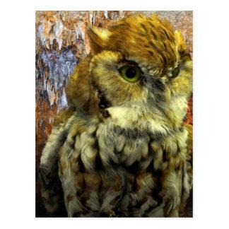 Cavern Owl Watch Postcard