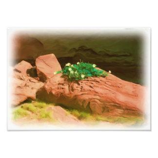 Caverna de la datura fotografía