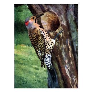 cavidad Amarillo-provista del parpadeo y del árbol Postal