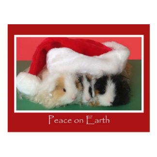 Cavy Christmas Guinea Pig Post Card