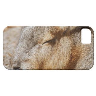 Cavy patagón iPhone 5 Case-Mate carcasas