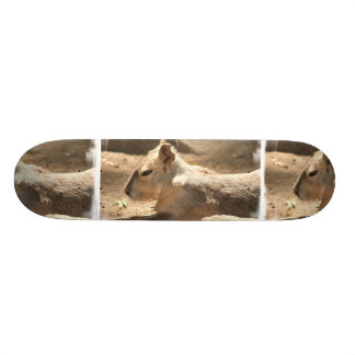 Cavy Skate Deck