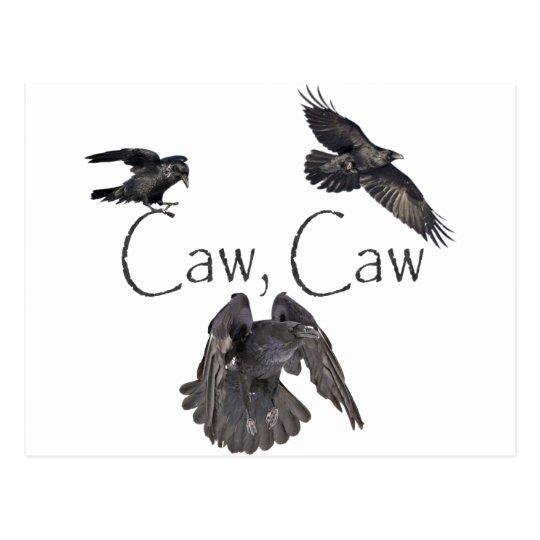 Caw Caw Postcard