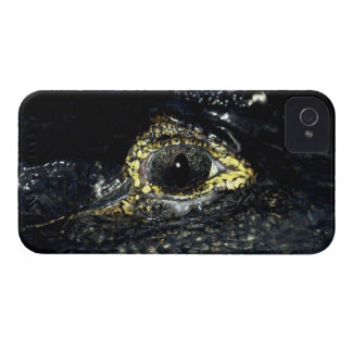 Cayman Crocodile Eyes Reptile Black Berry Blackberry Bold Covers