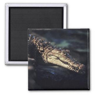 Cayman crocodile magnet