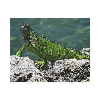 Cayman Iguana Canvas