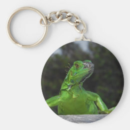 Cayman Iguana in Sunlight Keychain