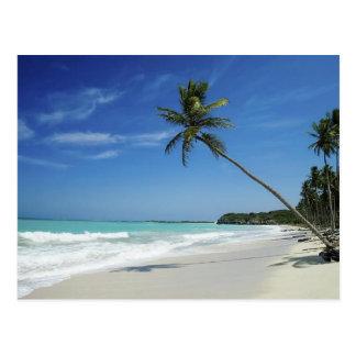 Cayman Island Beach Postcard