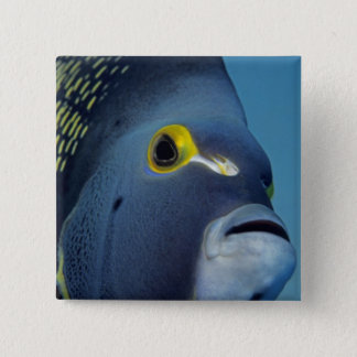 Cayman Islands, French Angelfish Pomacanthus Button
