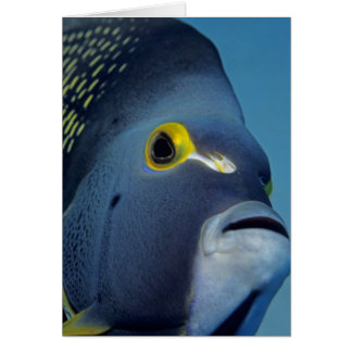 Cayman Islands, French Angelfish Pomacanthus Card