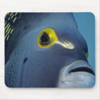 Cayman Islands, French Angelfish Pomacanthus Mouse Pad