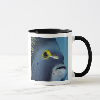 Cayman Islands, French Angelfish Pomacanthus Mug