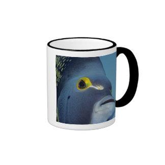 Cayman Islands, French Angelfish Pomacanthus Ringer Mug