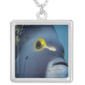 Cayman Islands, French Angelfish Pomacanthus Silver Plated Necklace