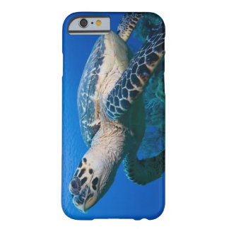 Cayman Islands, Little Cayman Island, Underwater 2 Barely There iPhone 6 Case