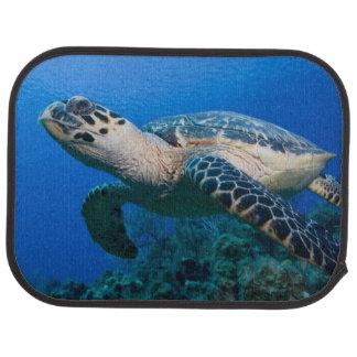 Cayman Islands, Little Cayman Island, Underwater 2 Car Floor Mat