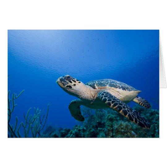 Cayman Islands, Little Cayman Island, Underwater 2 Card