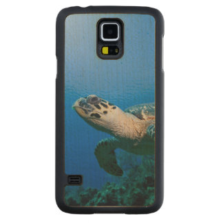 Cayman Islands, Little Cayman Island, Underwater 2 Carved® Maple Galaxy S5 Slim Case
