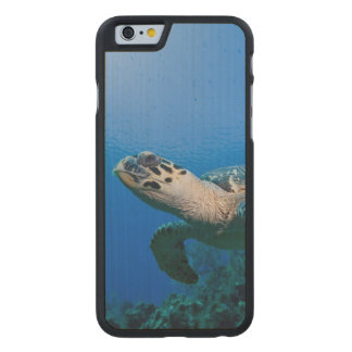 Cayman Islands, Little Cayman Island, Underwater 2 Carved® Maple iPhone 6 Slim Case