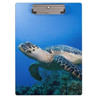 Cayman Islands, Little Cayman Island, Underwater 2 Clipboard