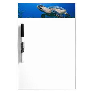 Cayman Islands, Little Cayman Island, Underwater 2 Dry-Erase Board