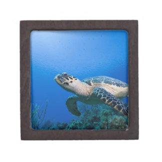 Cayman Islands, Little Cayman Island, Underwater 2 Gift Box