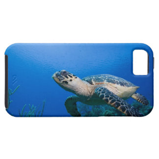 Cayman Islands, Little Cayman Island, Underwater 2 iPhone SE/5/5s Case