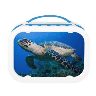Cayman Islands, Little Cayman Island, Underwater 2 Lunch Box