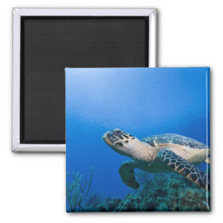 Cayman Islands, Little Cayman Island, Underwater 2 Magnet