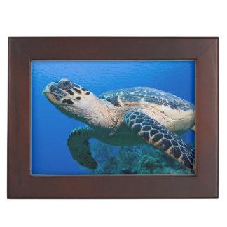Cayman Islands, Little Cayman Island, Underwater 2 Memory Box