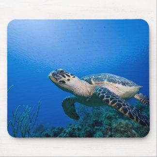 Cayman Islands, Little Cayman Island, Underwater 2 Mouse Pad