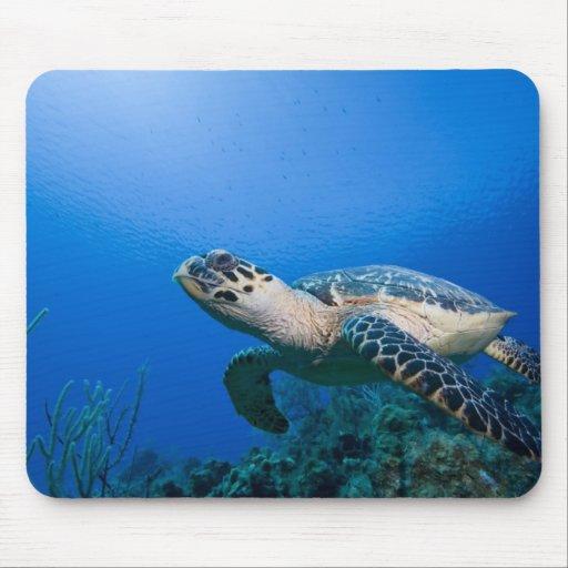 Cayman Islands, Little Cayman Island, Underwater 2 Mouse Pads