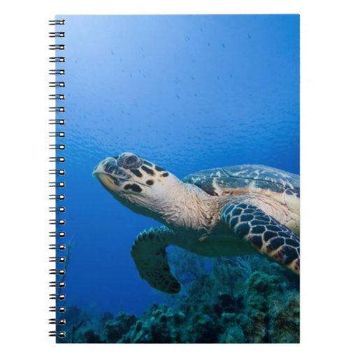 Cayman Islands, Little Cayman Island, Underwater 2 Note Book