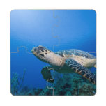 Cayman Islands, Little Cayman Island, Underwater 2 Puzzle Coaster
