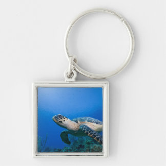 Cayman Islands, Little Cayman Island, Underwater 2 Silver-Colored Square Keychain