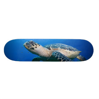 Cayman Islands, Little Cayman Island, Underwater 2 Skateboard Deck