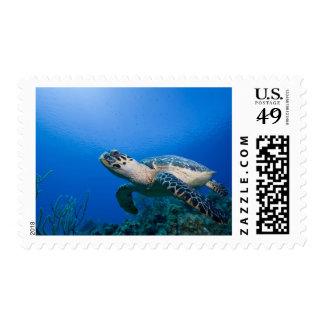 Cayman Islands, Little Cayman Island, Underwater 2 Stamp