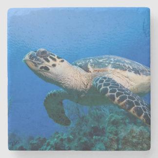 Cayman Islands, Little Cayman Island, Underwater 2 Stone Coaster