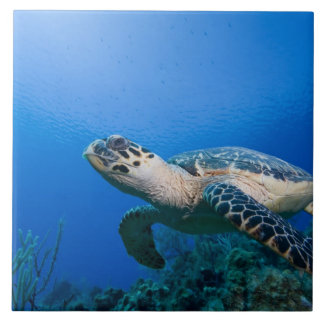 Cayman Islands, Little Cayman Island, Underwater 2 Large Square Tile
