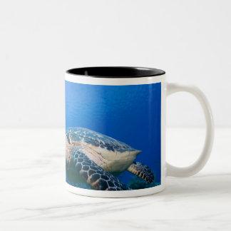 Cayman Islands, Little Cayman Island, Underwater 2 Two-Tone Coffee Mug